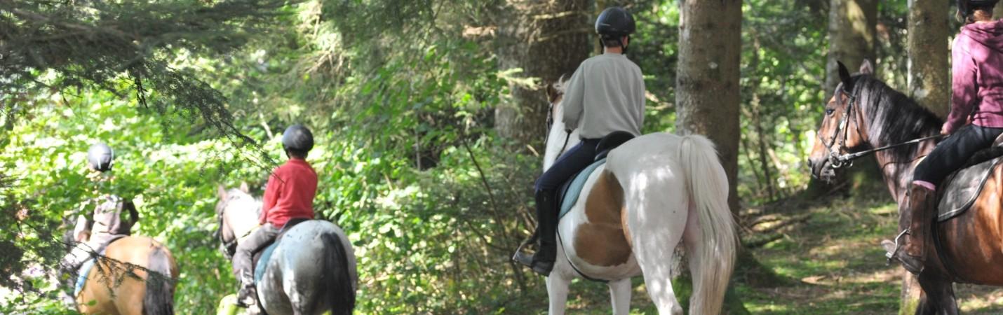 La Bresse Hautes Vosges Equitation