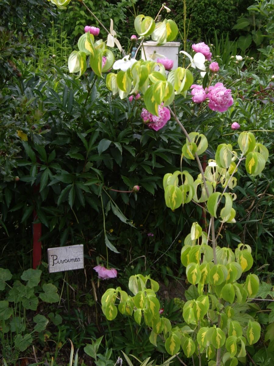 Atelier du petit jardinier Cornimont Hautes-Vosges